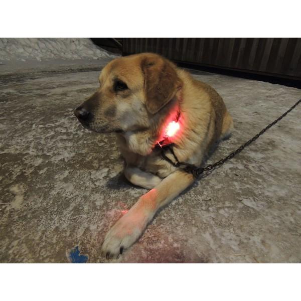 подсветка собаки цвет красный