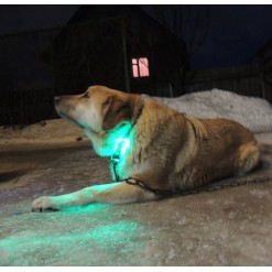 Подсветка для собаки