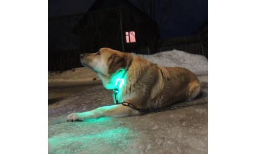 Подсветка ошейника собаки