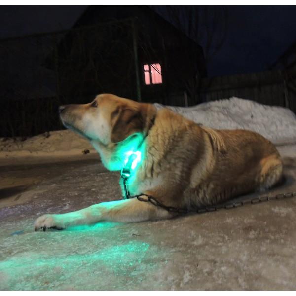 подсветка собаки зеленый цвет