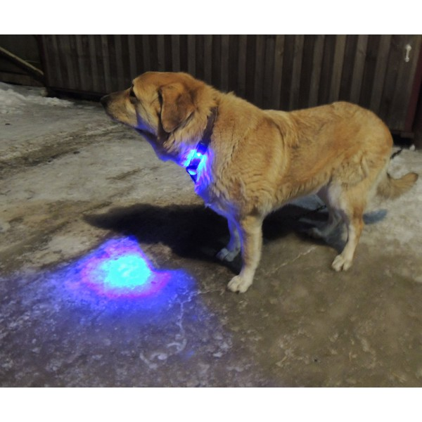 подсветка собаки синий цвет