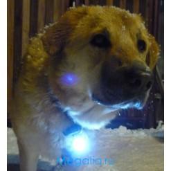 Брелок для собаки светящийся