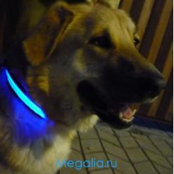 Ошейник для собаки светящийся