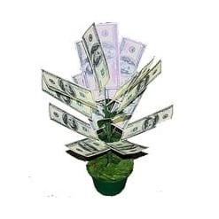 Денежное дерево 100 долларов