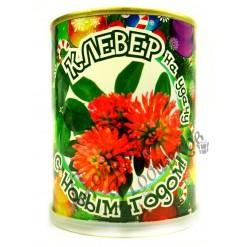 """Растение в банке """"Новогодний клевер"""""""